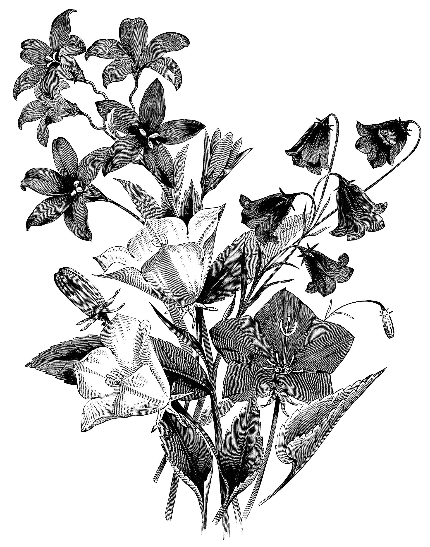1900x2415 White Flower Clipart Group Flower