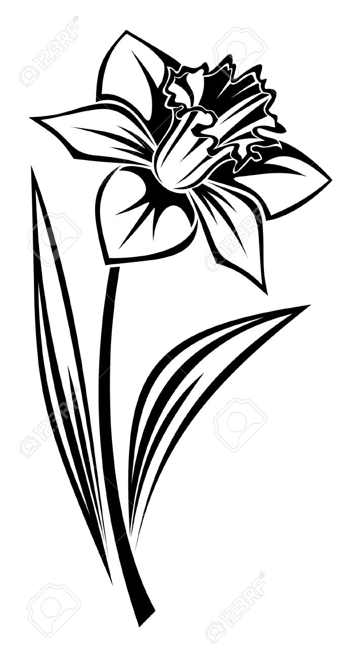 714x1300 Black Silhouette Of Narcissus Flower. Illustration. Royalty Free