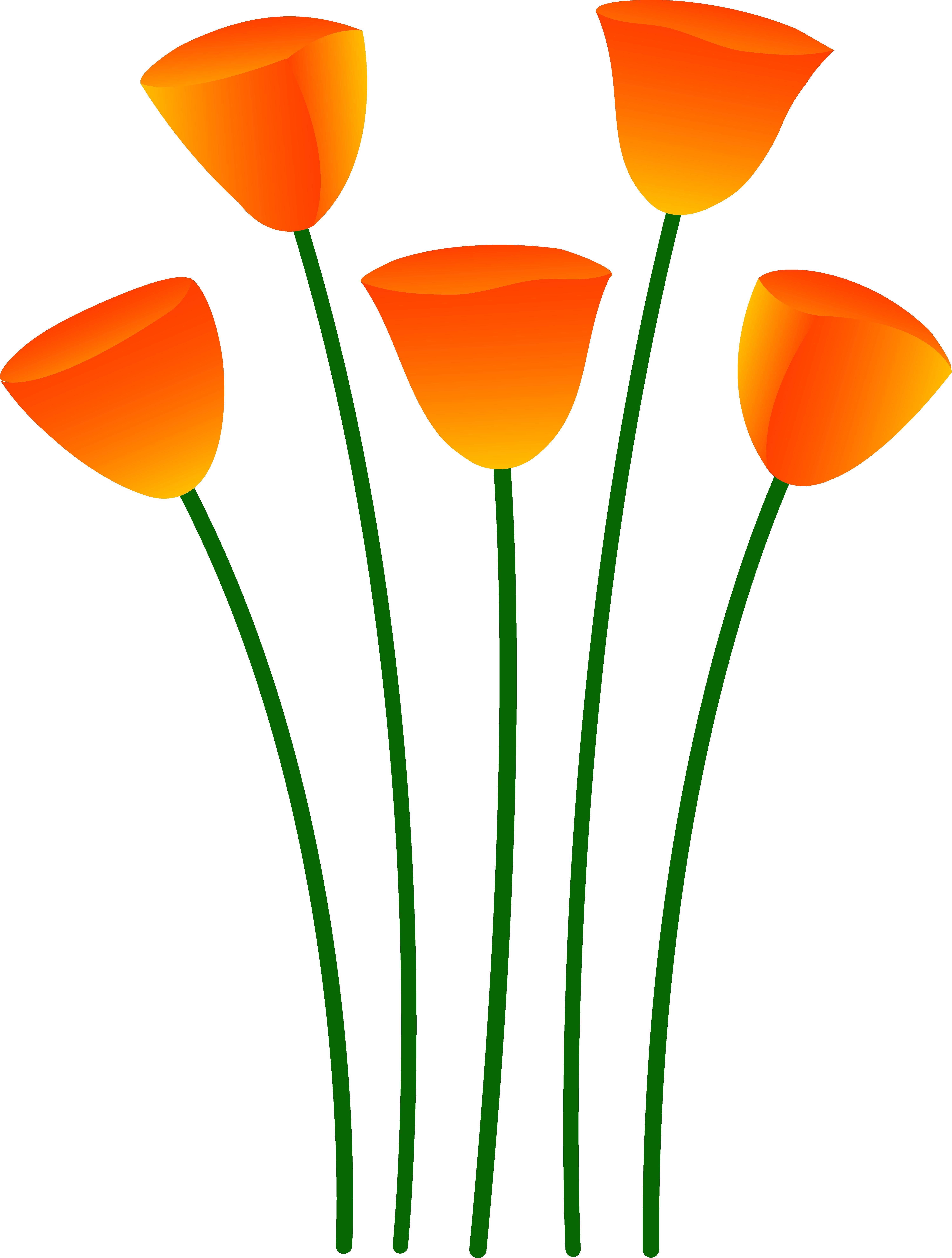 5992x7919 Orange Poppy Flowers
