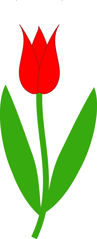 999x2456 Top 57 Tulip Clip Art