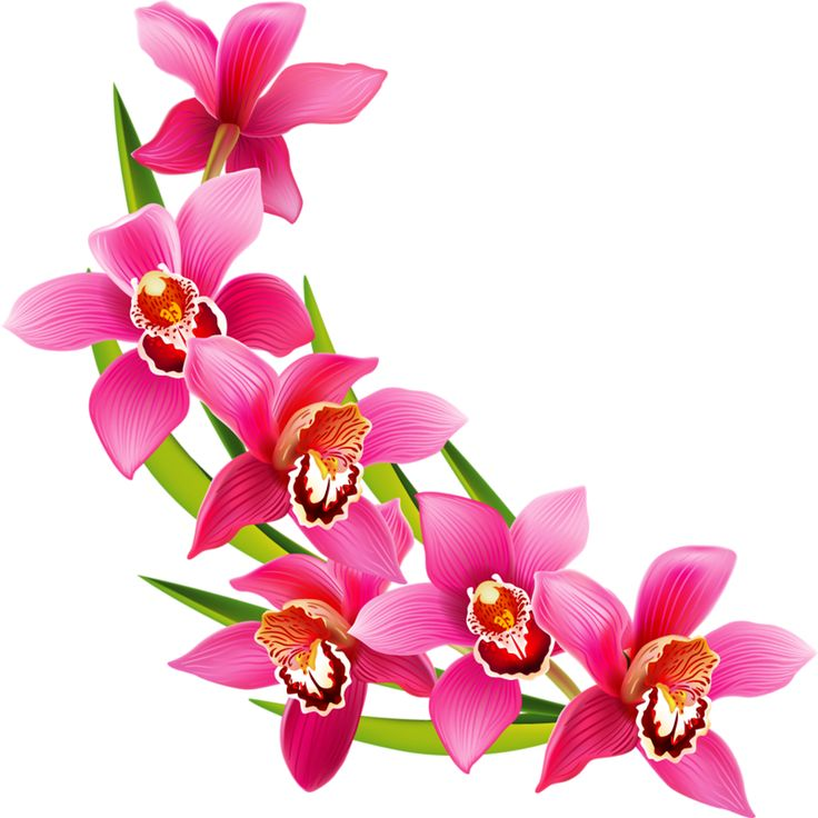 736x736 391 Best Clip Art Flowers Images Pictures, Birthday