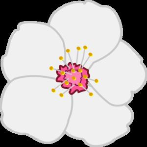 300x300 Almond Flower Clip Art