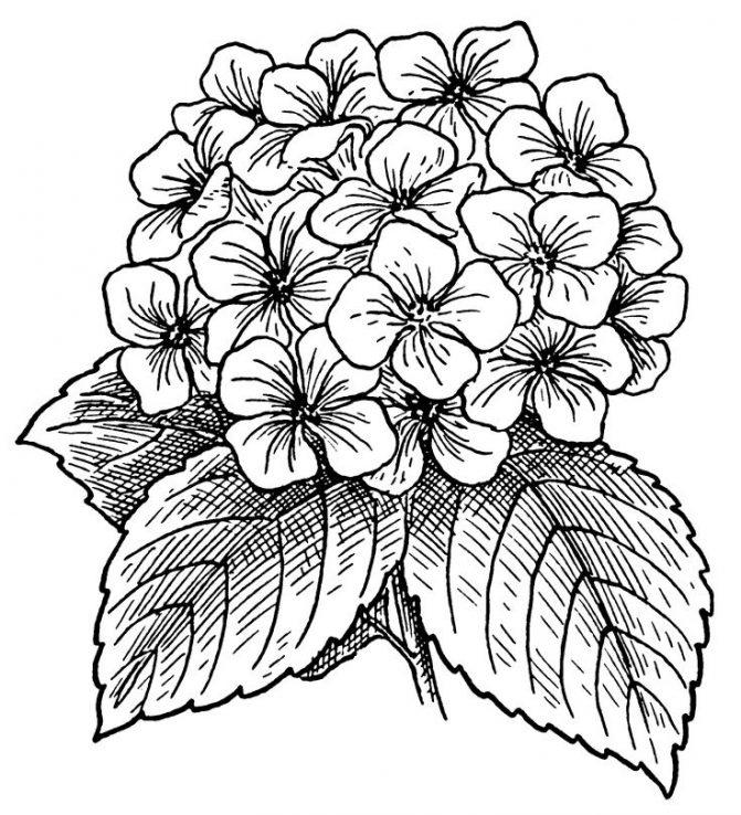 Flower Vase Clipart Black And White Free Download Best Flower Vase