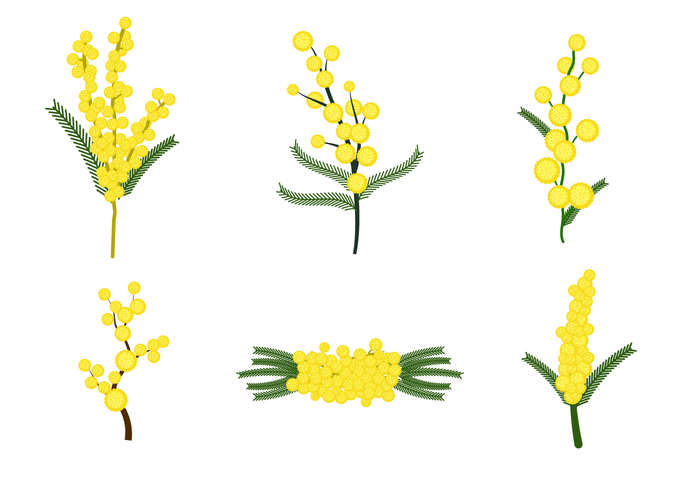 700x490 Free Mimosa Flower Vector
