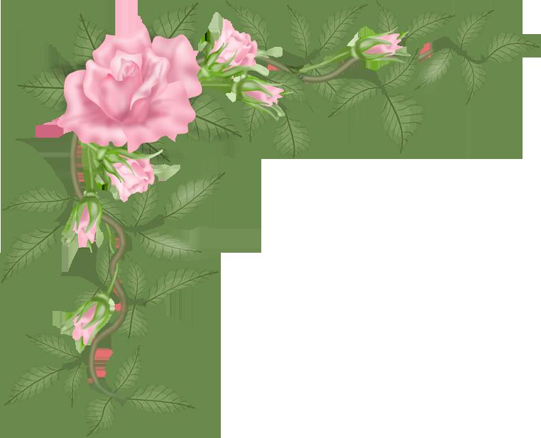762x617 Flowers