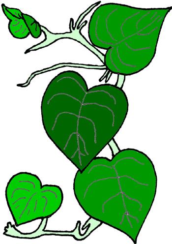 350x496 Flower Vine Clip Art Image