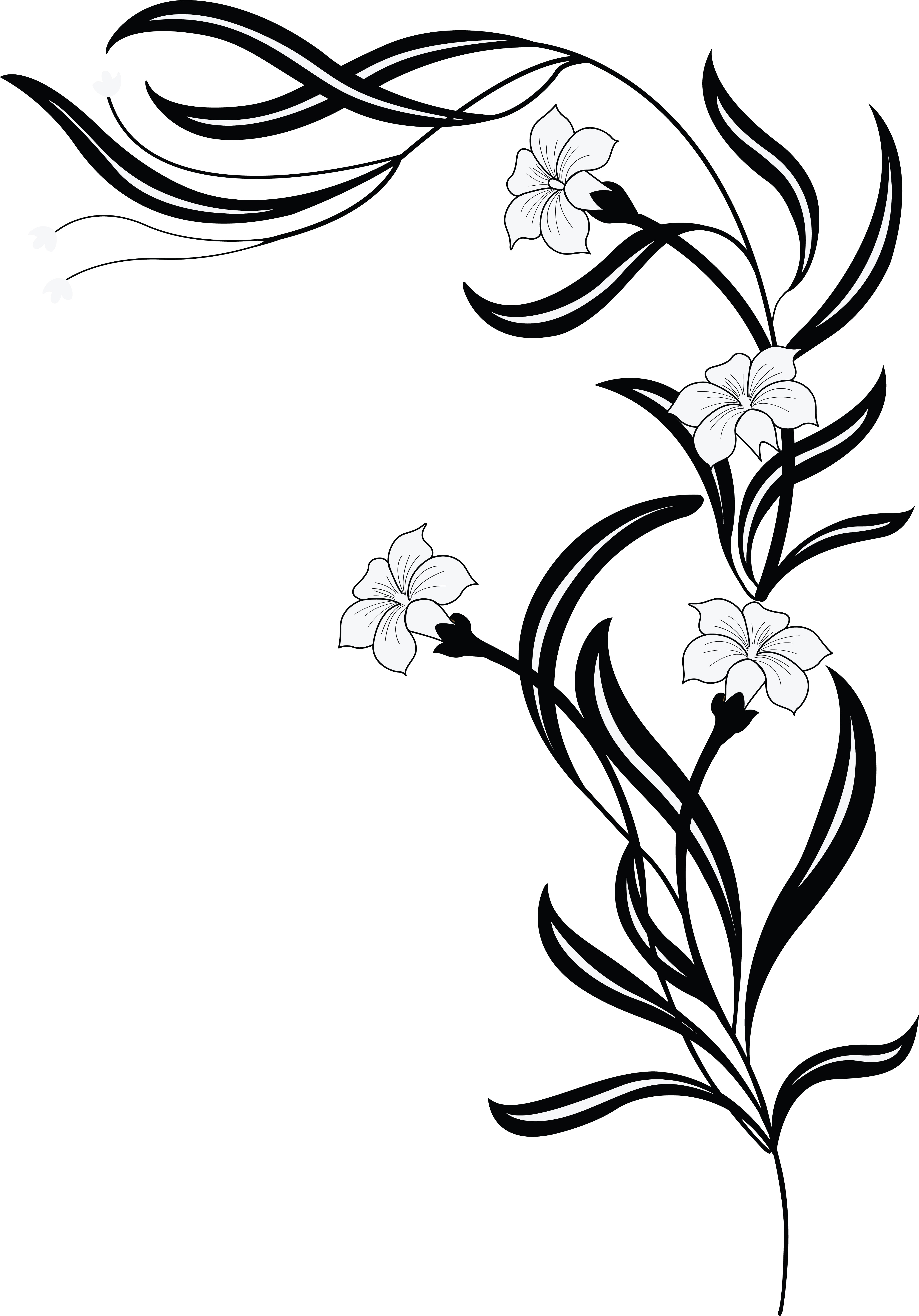 4000x5729 Clipart Of A Grayscale Floral Vine