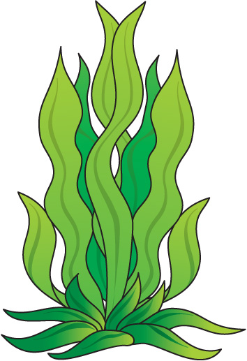 354x517 Weed Clipart Ocean Plant