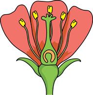 191x195 Flower Parts Clip Art Clipart