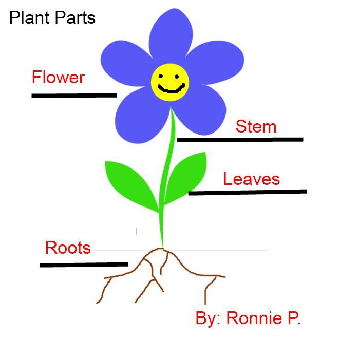 660x660 Stem Clipart Flower Root