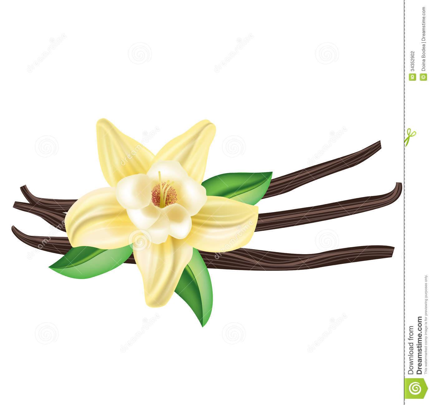 1385x1300 White Bean Flower Clipart