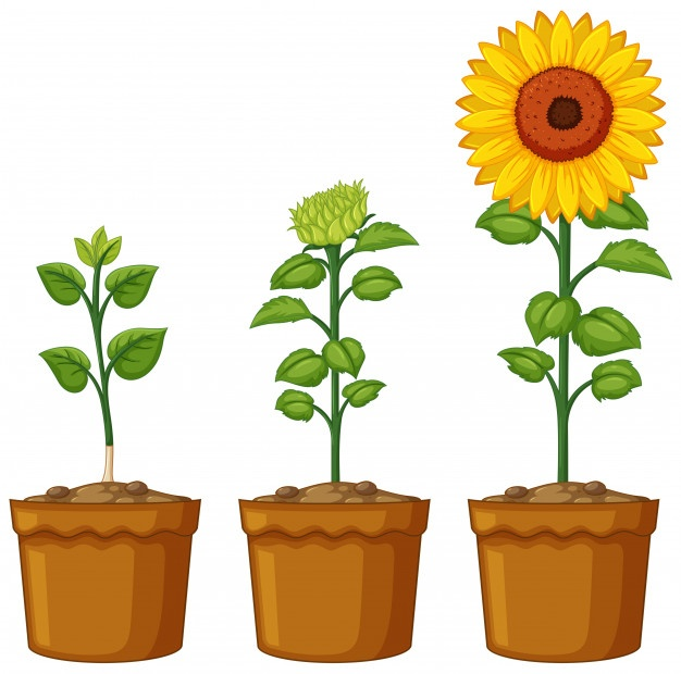 626x620 Flowerpot Vectors, Photos And Psd Files Free Download