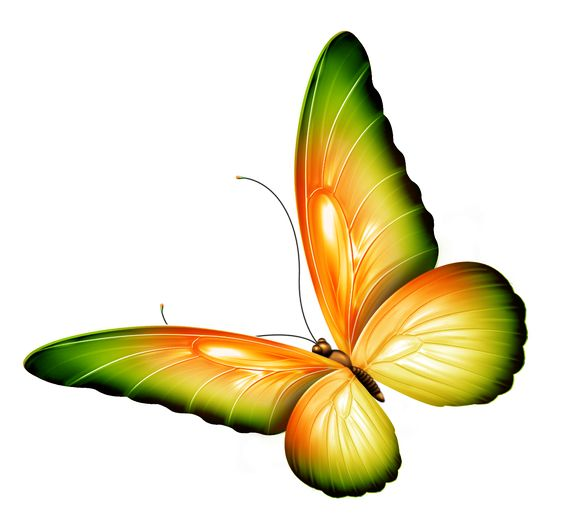 564x521 Clipart Flowers And Butterflies