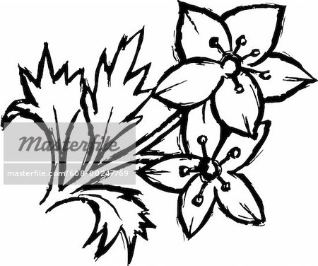 450x376 Drawings Of Flowers In Black And White