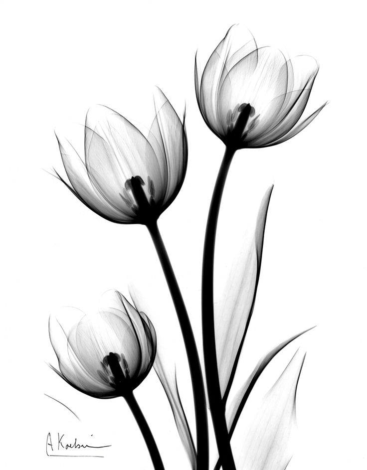 736x943 Black And White Flower Tattoos