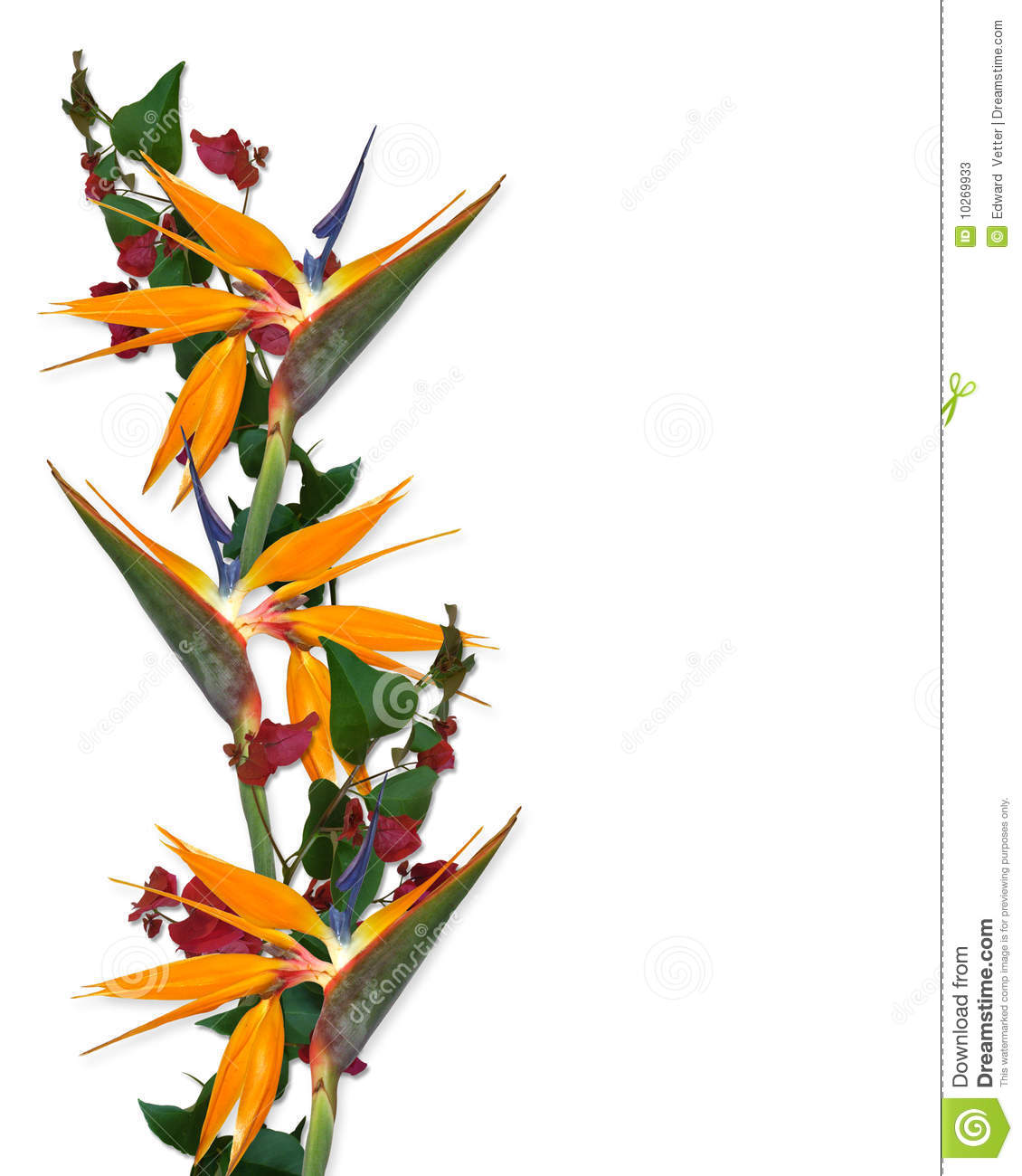 1130x1300 Hawaiian Flower Border Clip Art Clipart Panda