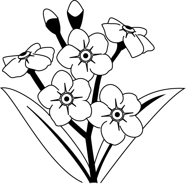 625x617 Black And White Forget Me Not Flower Clipart