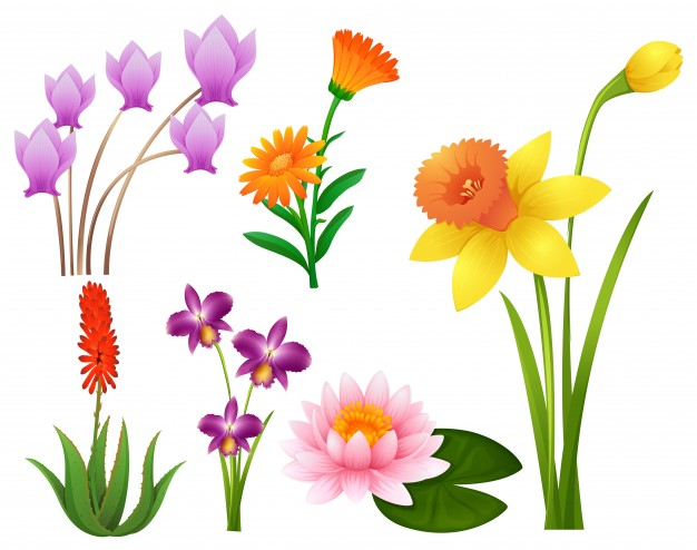 626x494 Grass And Flowers Clip Art Free Clipart Images Clipartwiz