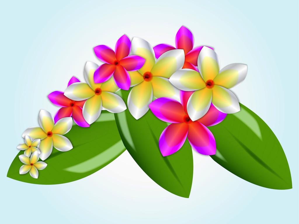 1024x769 Plumeria Hawaiian Flower Clip Art Clipart Free Download