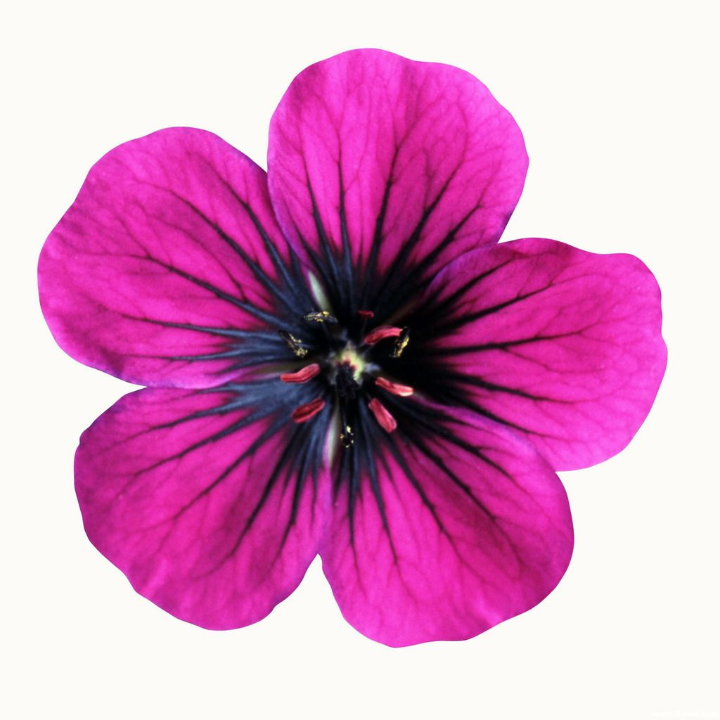 1024x1024 Free Printable Images Of Flowers