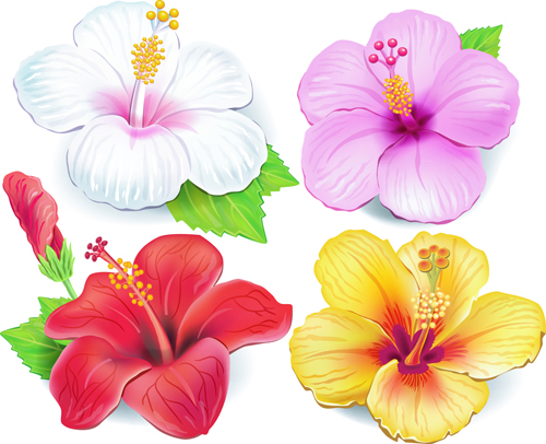 500x406 Beautiful Flowers Vector 04