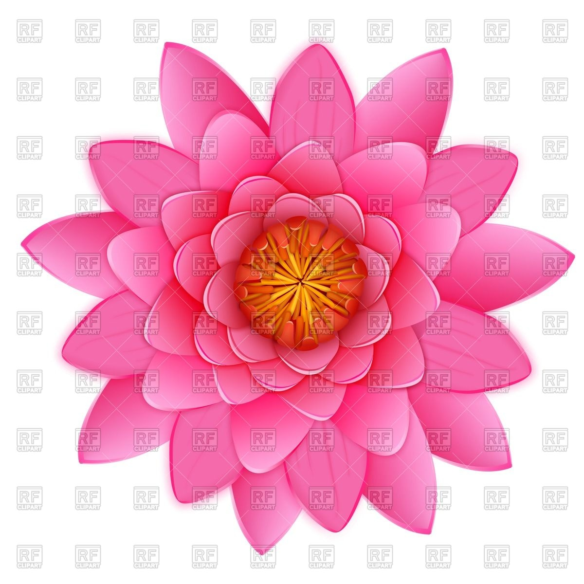 Flowers Images Free | Free download best Flowers Images Free
