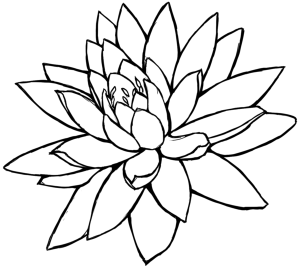 600x536 White Flower Clipart Line Drawing Flower