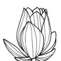 200x200 Line Drawing Of Flowers Clipart