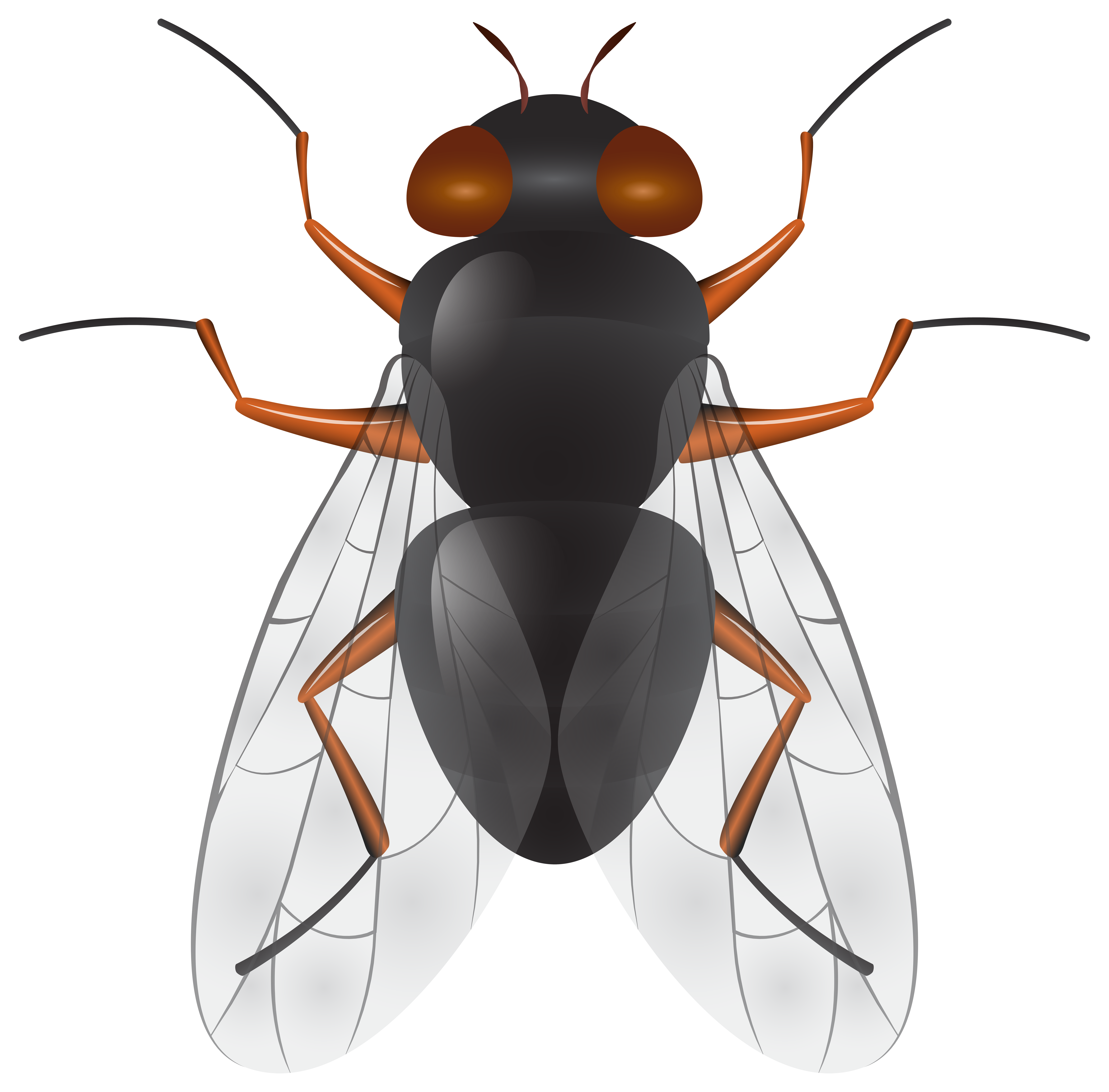 8000x7881 Fly Png Clip Art