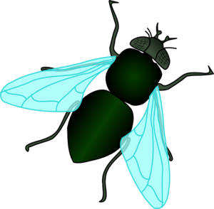 300x294 Green House Fly Clip Art