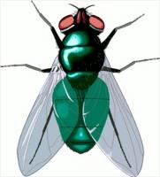 181x200 House Fly Clipart