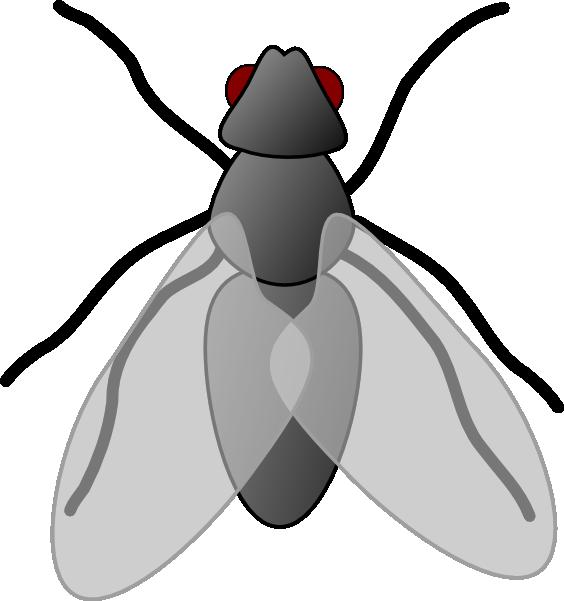 564x601 Top 68 Fly Clip Art