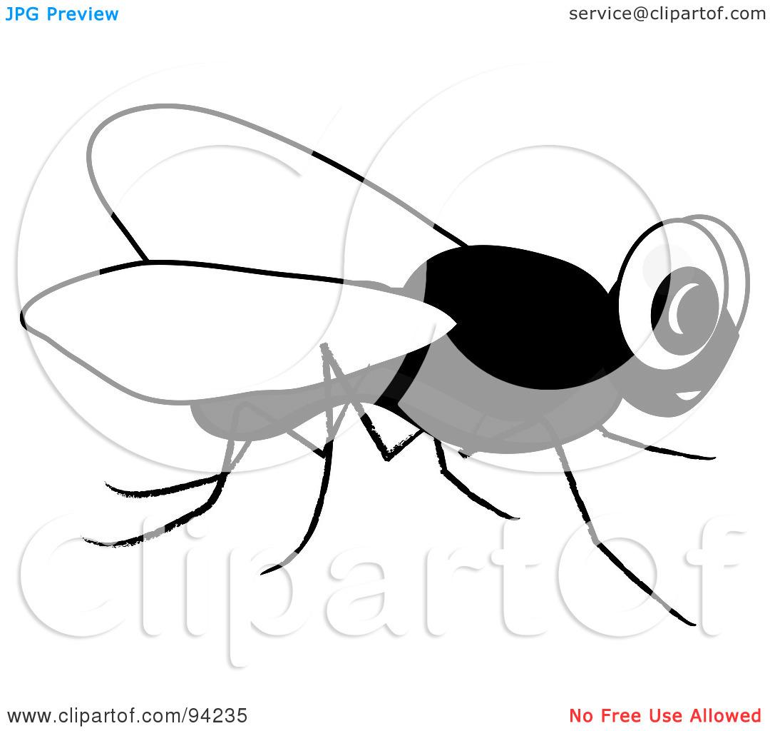 1080x1024 Fly Clip Art