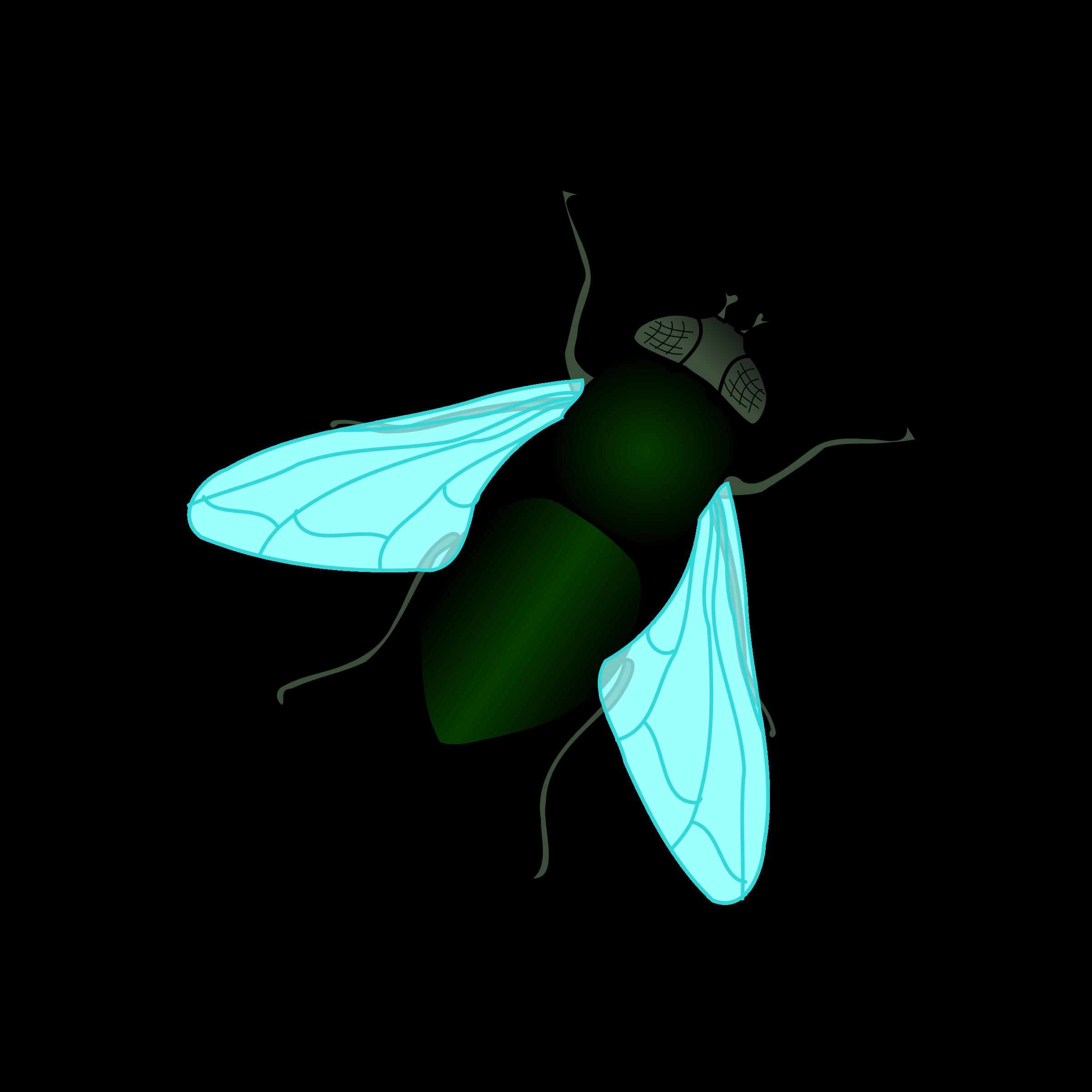 2400x2400 Bugs Clipart House Fly