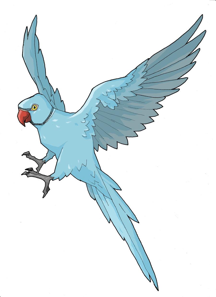 900x1237 Drawn Parakeet Bird Fly