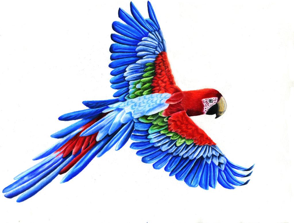 1024x778 Drawn Parrot Bird Fly