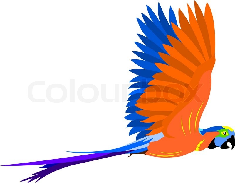 800x625 Flying Parrot Stock Vector Colourbox