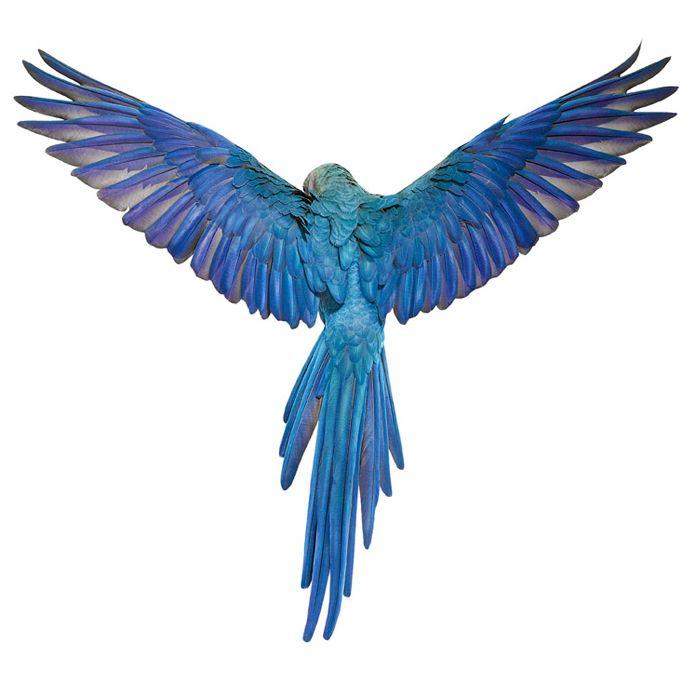 700x674 Best Parrot Wings Ideas Parrot Feather, Parrot