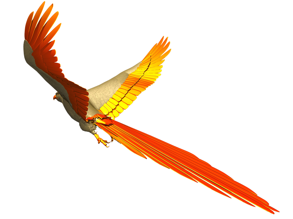 960x720 Free Photo Fly Colorful Parrot Isolated Flight