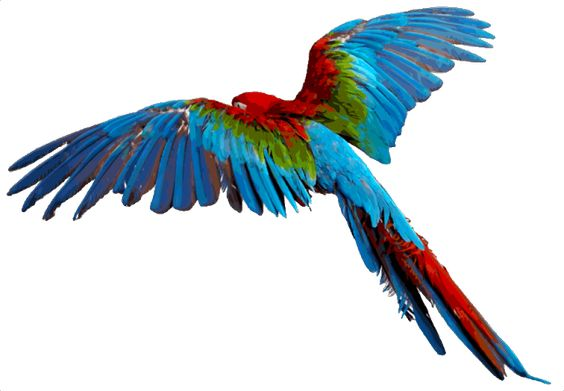 564x391 Image Result For Birds Flying Png 101.1 Wild Life