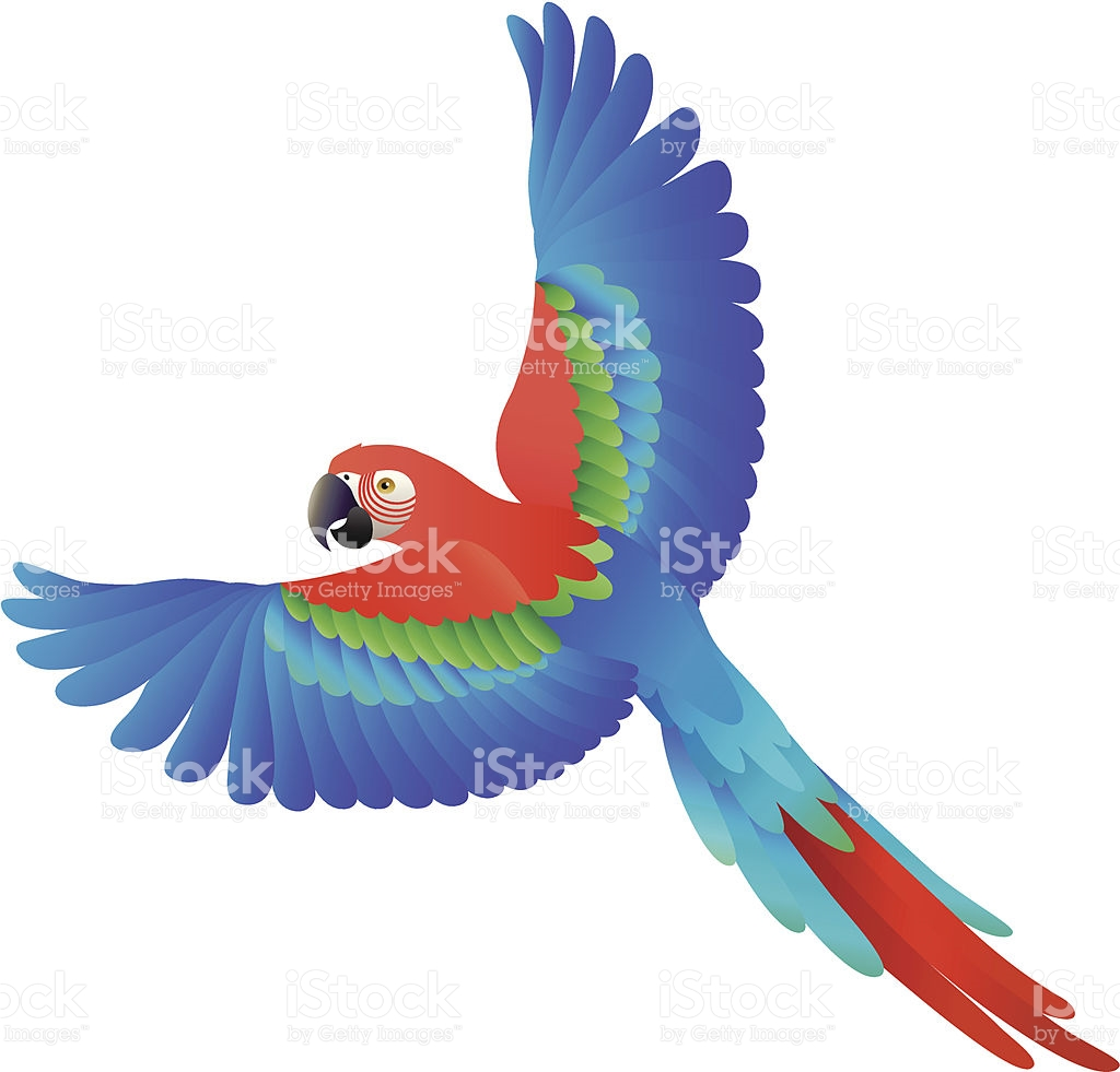 1024x981 Macaw Clipart Flying