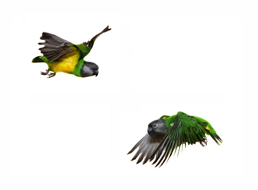 850x627 Parrot Behaviour Parrot Behaviour Parrots Guide Omlet Uk