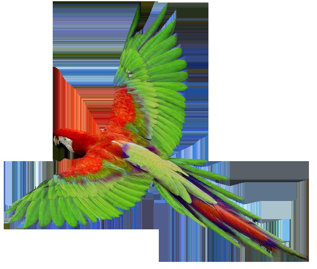 1022x868 Parrot Flying Clipart Panda