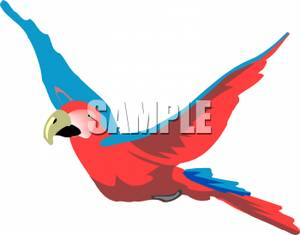 300x235 Parrot In Flight Clipart Picture