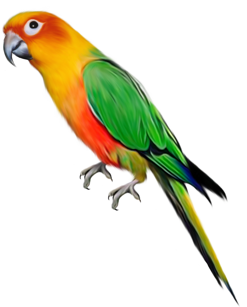 828x1029 Parrot Twenty One Isolated Stock Photo By
