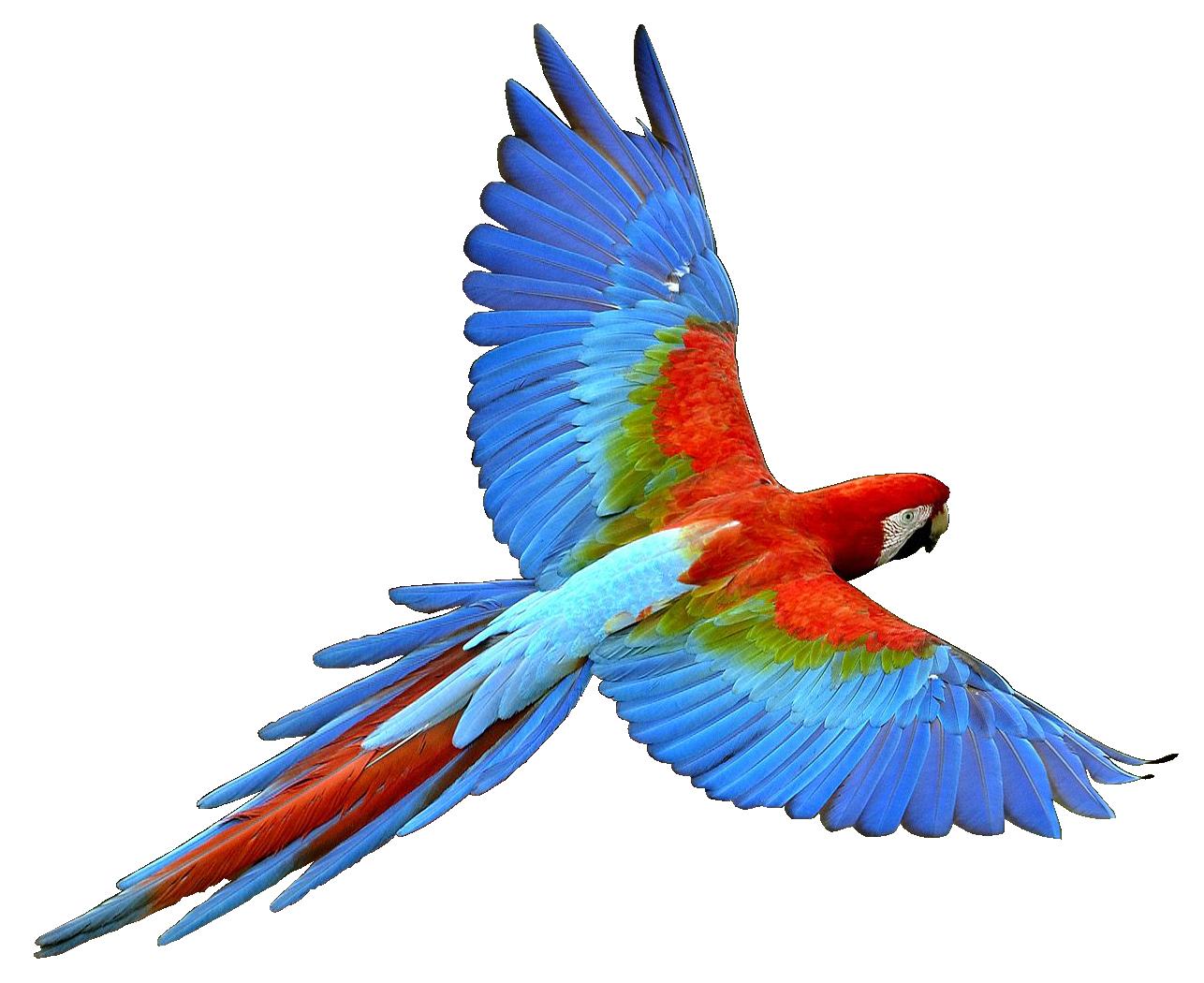 1286x1050 Parrot Transparent Image Parrot Animal