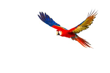 359x240 Search Photos Category Animals Gt Birds Gt Parrots