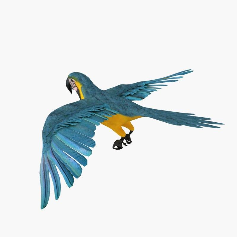 800x800 Model Parrot Animation Flying