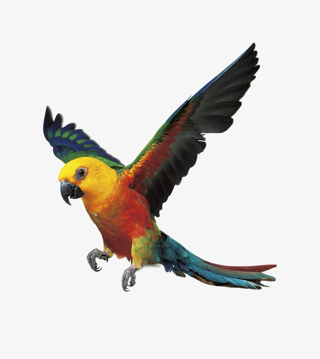 639x717 Parrot, Color Fly, Birds Png Image For Free Download