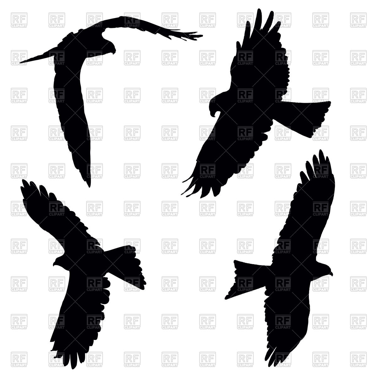 1200x1200 Flying Pariah Or Black Kite